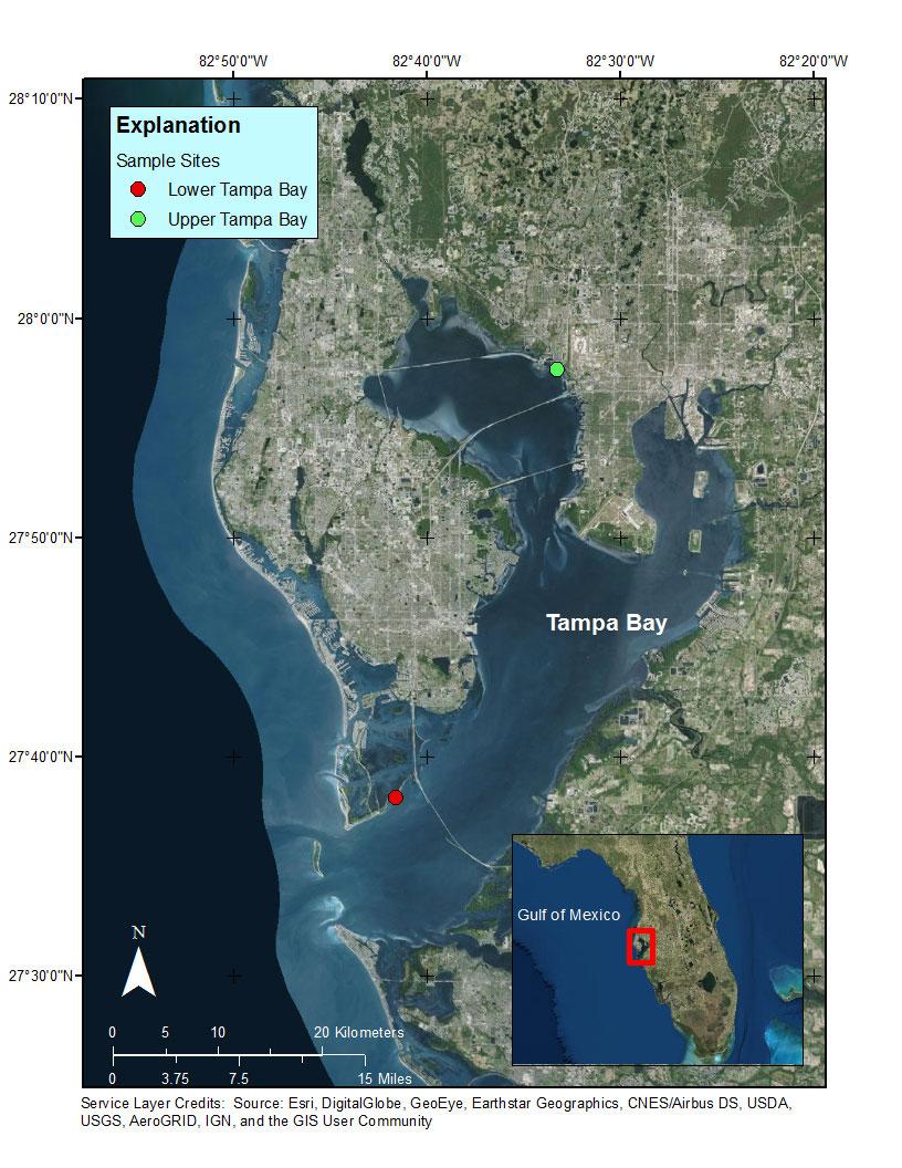 Tampa Florida Usa Map.Data Release Discrete Carbonate System Parameter Measurements In
